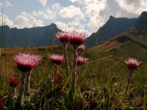 Mountains, Drakensberg, Hiking